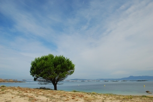 1397806_tree_in_the_beach